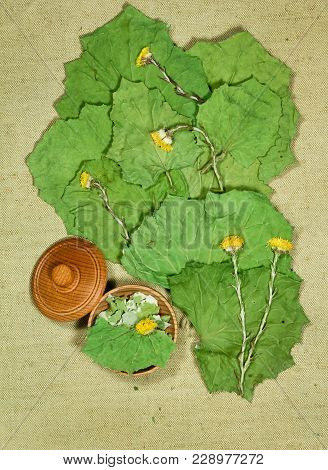 Coltsfoot, Foalfoot. Dry Herbs For Use In Alternative Medicine, Phytotherapy, Spa, Herbal Cosmetics.