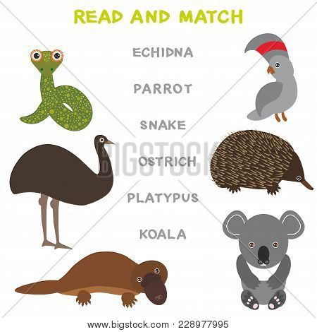 Kids Words Learning Game Worksheet Read And Match. Funny Animals Ostrich Snake Parrot Echidna Platyp