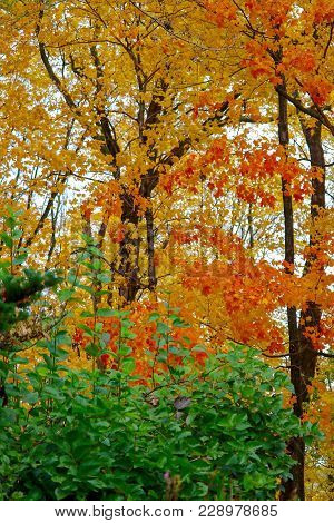 Orange, Yellow, Green Autumn Leaves And Branches