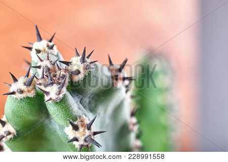Abstract View Of Cactus Spines. Concept Self-defense, Resistance. Copy Space.