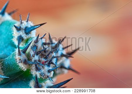 Abstract View Of Cactus Thorns. Concept Self-defense, Resistance. Copy Space.
