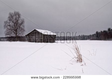 The Pine Trees In The Forest Have Been Covered With Frost And Snow In The Rural Finland. The Snow Ha