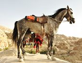 Arabic horse poster