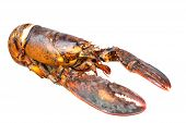 Nice piece of lobster isolated on white background poster