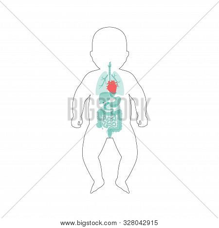 Vector Isolated Illustration Of Newborn Child Internal Organs Of Baby. Stomach, Liver, Intestine, Bl