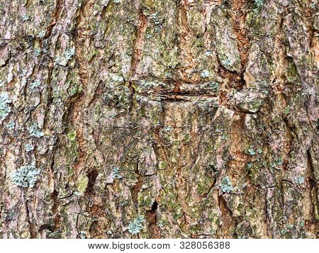 Natural Texture - Wrinkly Bark On Mature Trunk Of Ash Tree (fraxinus Excelsior) Close Up