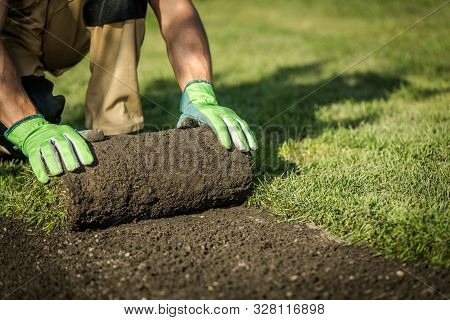 Professional Landscaper Installing New Grass Turfs From A Roll. Garden Building Theme. Landscaping I