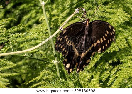 Black And White Butterfly Sitting In A Green Plant