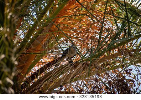 Small Bird In A Tree With Colorful Foliage