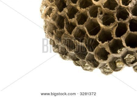 old empty wasp nest in the frame corner copy space poster