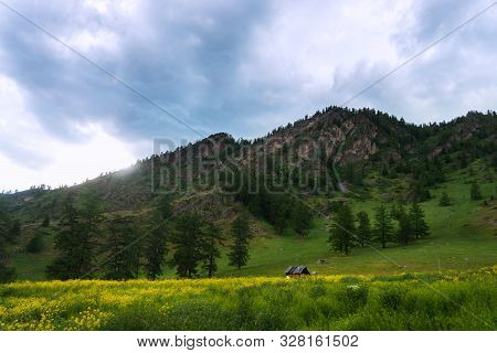 Old Wooden House In The Meadow, Where A Lot Of Grass And Wildflowers In The Mountain Forest On The B