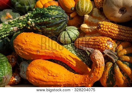 Display With Mix Of Ripe, Red, Orange, Yellow, Green Pumpkins, Squash And Gourds With Different Vari