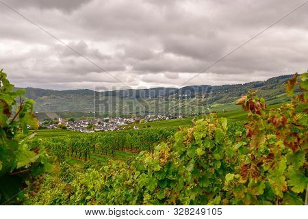 Wine Landscape Near Cochem And Leiwen On The Moselle