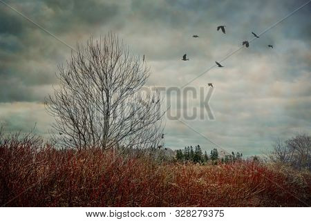 Crows flying over a leafless tree in a late fall landscape.