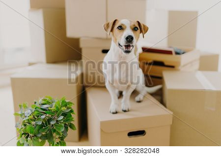 Funny Dog Sits On Carton Boxes, Green Indoor Plant Near, Relocates In New Modern Apartment, Has Brow