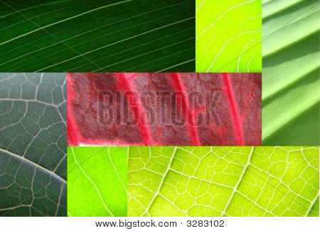 Leaf Collage Green
