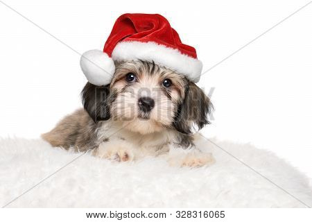 Cute Havanese Puppy Is Lying On A White Pillow In Santa's Hat