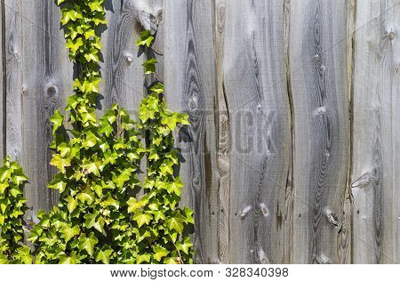The Photo Shows A Weathered Wooden Fence With Leaves