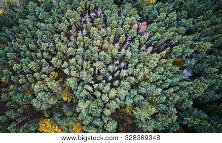 Green Dry Forest