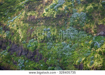 Lagoa Comprida, Flores, Azores, Portugal