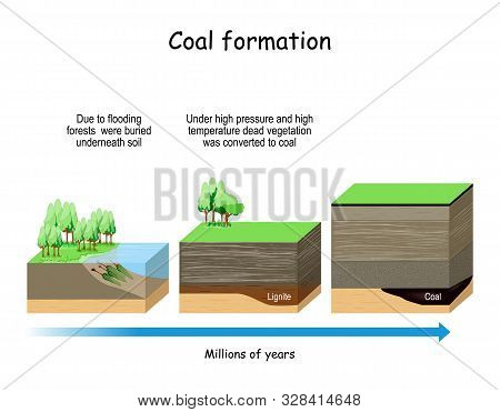 Coal Formation. Fossil Fuel That Derived From Ancient Fossilized Vegetation.