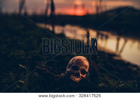 Happy Halloween. Skull And Scary Scene In The Forest
