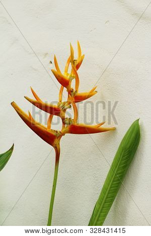 Bird Of Paradise Flower In The Nature