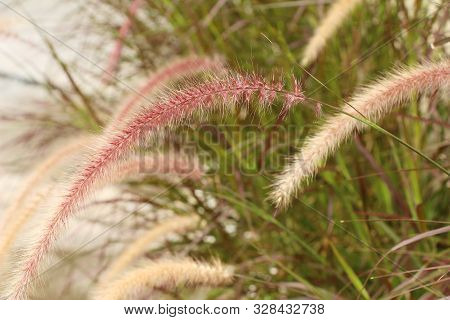Grass Flowers At Beautiful In The Nature