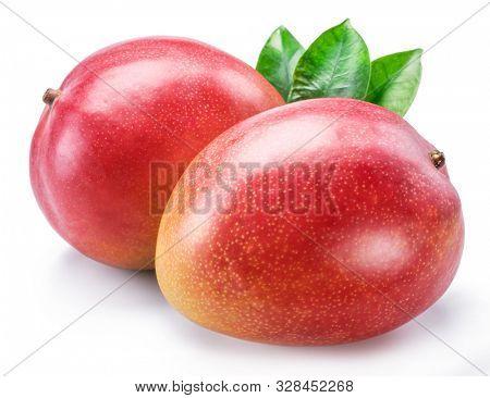 Mango fruit with mango leaves. Isolated on a white background.