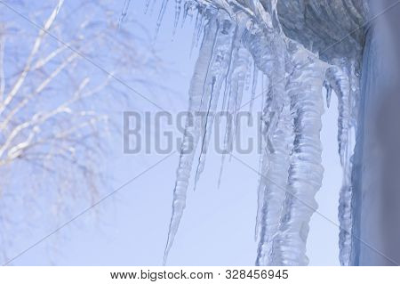 Crystal Clear Sharp Icicles Hanging Down In Winter Time. Dangerous Transparent Icicles Are Hanging F