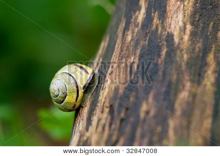 Yellow striped snail climbing at the tree poster