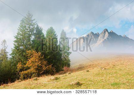 Fir Trees On The Grassy Hillside On Foggy Morning. Breathtaking Autumn Scenery. Magical Nature Backg