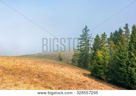 Spruce Trees On The Grassy Hillside On Foggy Morning. Magical Autumn View. Beautiful Nature Backgrou