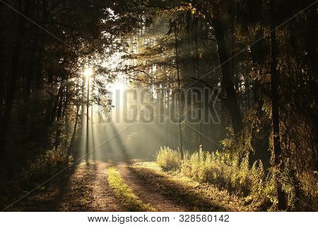 Rrising sun falls autumn forest sunrise Nature background Nature landscape. Path in Nature Nature background Natural environment in autumn forest Autumn Travel in Nature Road mist Nature background Trees in foggy fall woods Road fog Hiking in outdoors.