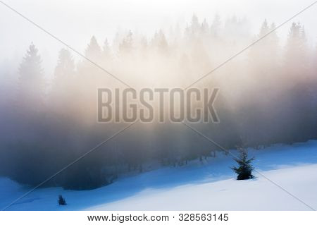 Misty Morning In The Winter. Spruce Forest On A Snow Covered Slope In Glowing Fog. Beautiful Nature