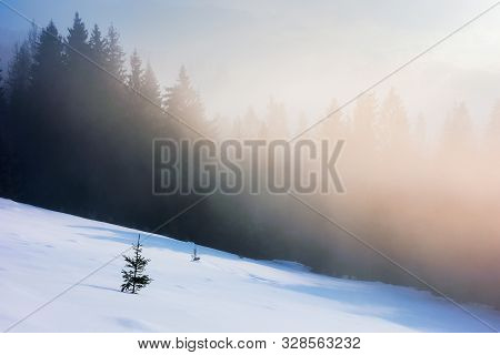 Misty Morning In The Winter. Spruce Forest On A Snow Covered Slope In Glowing Fog. Wonderful Nature