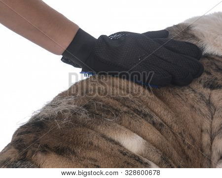 grooming glove brushing the back of an English bulldog