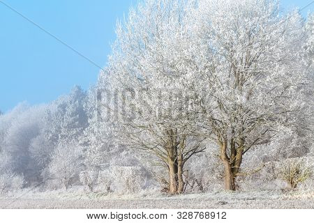 Frozen Winter Trees Landscape. Freezing Fog Covered Trees In An English Snow Scene