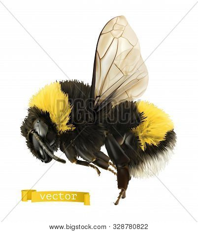 Bumblebee. 3d Realistic Vector Icon On White Background