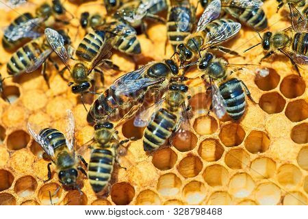 Macro Photo Of A Bee Hive On A Honeycomb With Copyspace. Bees Produce Fresh, Healthy, Honey. Queen B