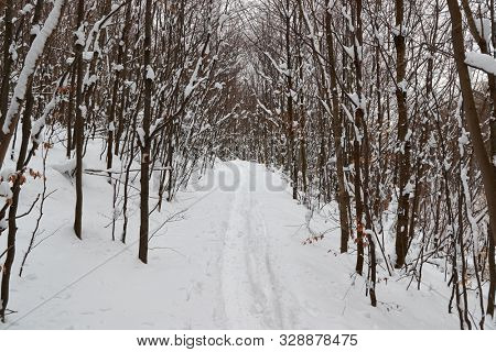 Forest path in winter covered by snow