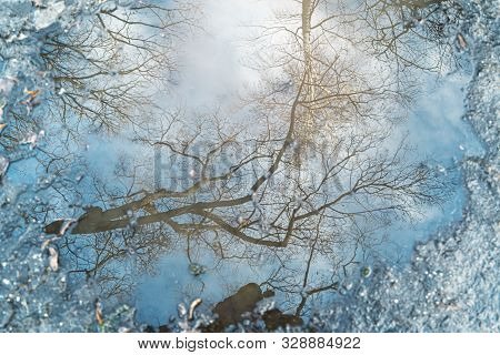 Reflection Of A Tree In A Puddle For Backgrounds