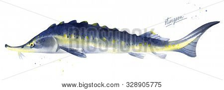 Sturgeon, Russian sturgeon fish illustration. Watercolor on white background