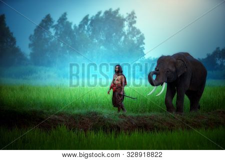 Thailand, The Mahout, And An Elephant Walking On The Rice Field