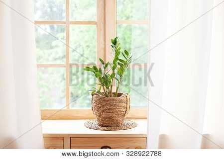 Concept Of Home Gardening. Zamioculcas In Flowerpot On Windowsill. Home Plants On The Windowsill.  G