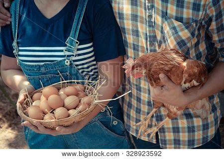 Couple Farmer Holding Fresh Chicken Eggs Into Basket And Holding  Hen Beside Chicken Farm. Concept O