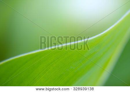 Green leaf on blurred greenery background. Beautiful leaf texture in sunlight. Natural background. c