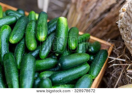 Basket Of Cucumbers At The Farmers Market. Close Up Composition Of Harvesting Vegetables.