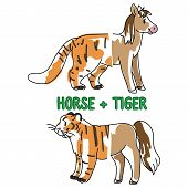 Childish tiger and horse animal splice vector illustration. Hand drawn doodle inked wildlife animal creature mixture, trendy feline and equine monster clipart. poster