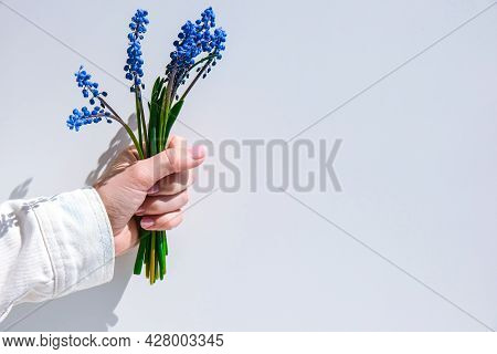 Female Hands Holding Blue Muscari Flowers. Gift From Child For Mothers Day. Small Bouquet Blue Musca